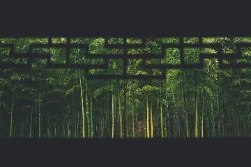 2021国庆【大山深处】穿越金口河大峡谷丨探秘中国百慕大丨竹海深处看萧洞飞虹4日自驾游