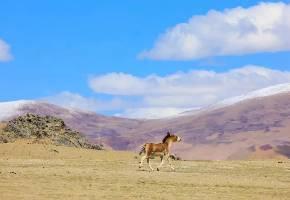 革吉沿途草原