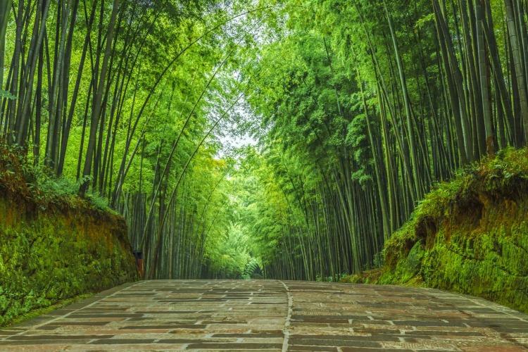 蜀南竹海旅游