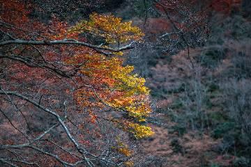 【巴山红叶】醉美金秋•光雾山红叶 3 日自驾之旅