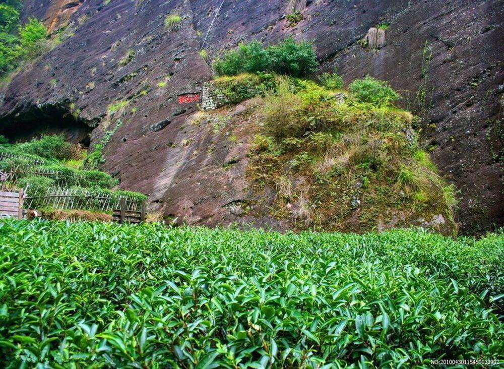 武夷山大红袍景区