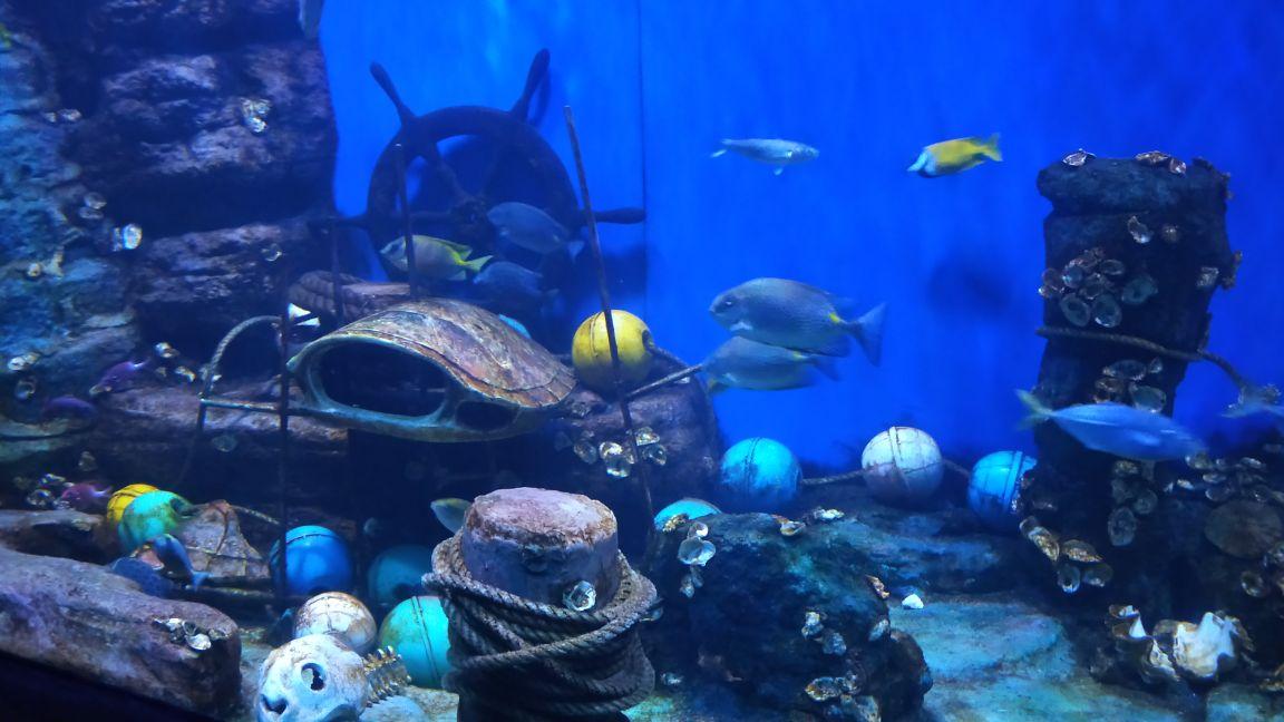 """北海海底世界坐落于北海海滨公园内,是北海老牌的海族馆。这里可以看到种类丰富的海洋生物,如活体珊瑚、鲨鱼、海龟等,还有蛇和蜥蜴之类的两栖动物,以及一些珍稀生物标本。这里还拥有长长的海底观光隧道,更有""""人鲨大战""""等精彩的演出。海底世界主要分为A 、B两个区域。A区主要为海底生物观赏区,B区主要为标本区和表演区。"""
