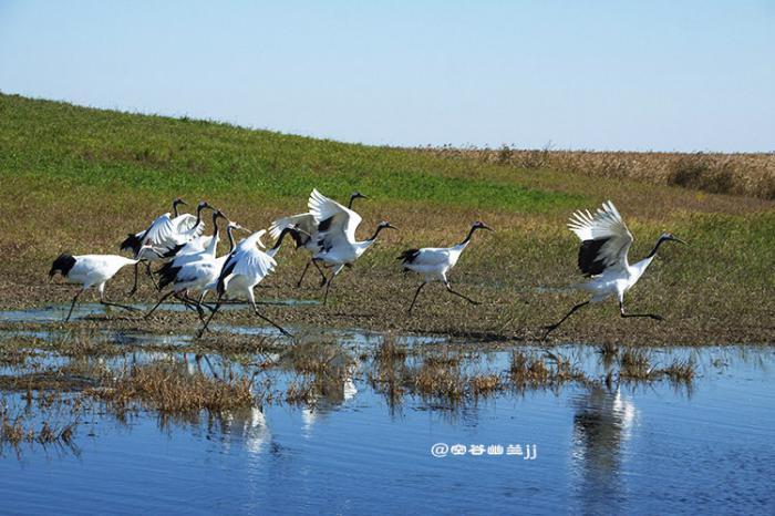 丹顶鹤之乡-扎龙,黑龙江扎龙国家级自然保护区