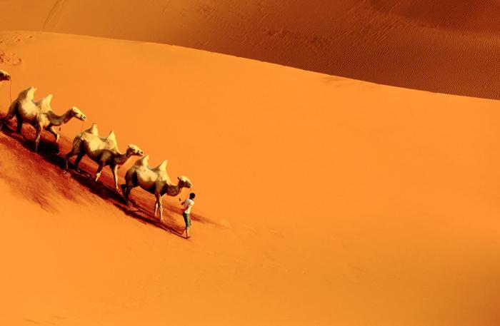 【自驾游攻略】高原之美在西藏,沙漠之美在新疆,新疆库木塔格沙漠的黄昏驼影