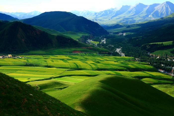 【自驾游攻略】青海祁连山草原,带你领略夏季的美
