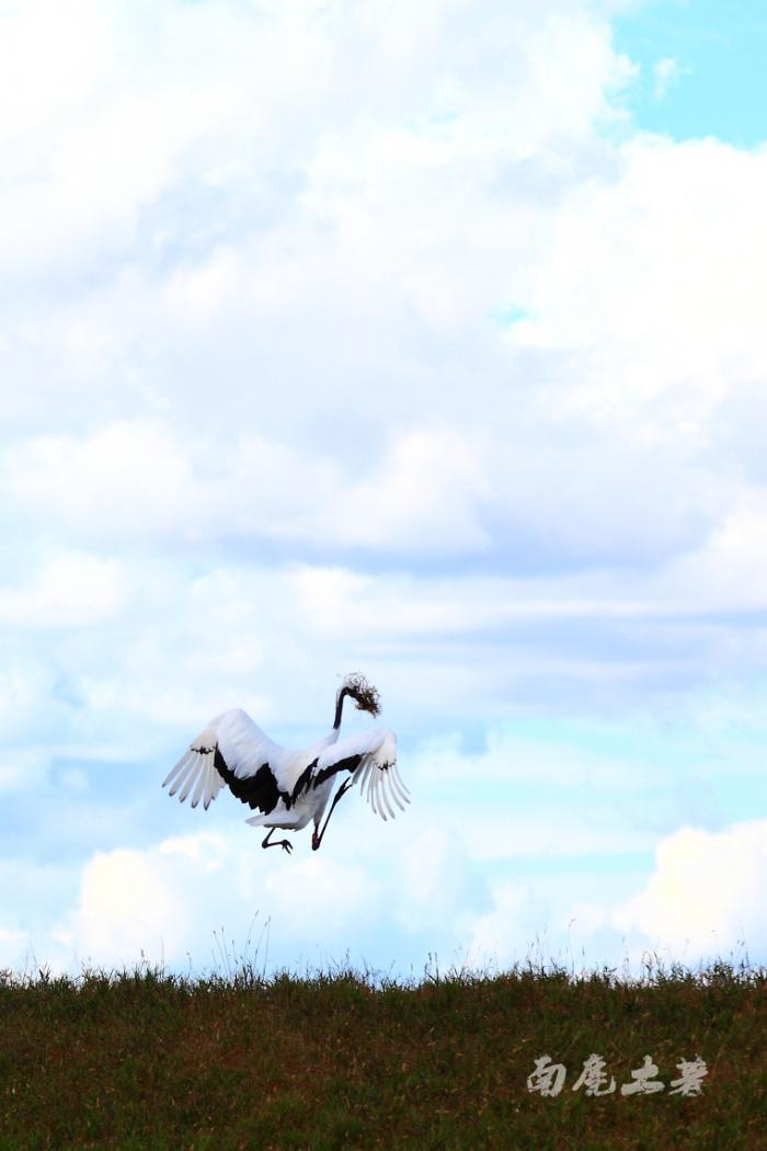【自驾游攻略】扎龙湿地丹顶鹤栖息地,一起来看丹顶鹤跳舞