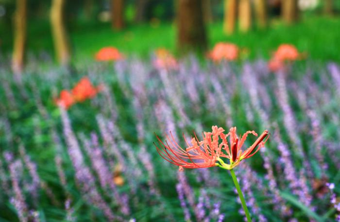 【自驾游攻略】杭州西湖太子湾,夏日花显花满花开时